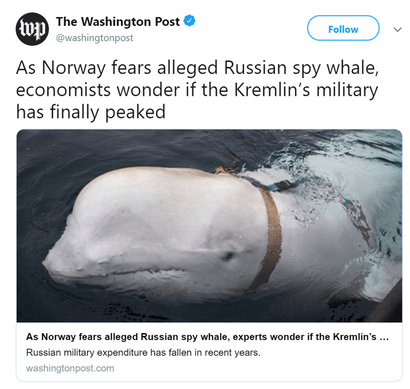 Organism - The Washington Post Follow @washingtonpost As Norway fears alleged Russian spy whale, economists wonder if the Kremlin's military has finally peaked As Norway fears alleged Russian spy whale, experts wonder if the Kremlin's ... Russian military expenditure has fallen in recent years. washingtonpost.com