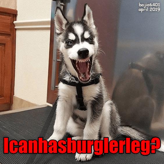 Cheezburger Image 9300284160