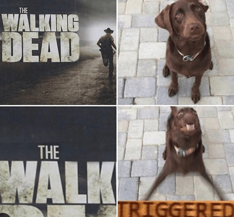 Dog - THE WALKING DEAD THE NALK TRIGGERED