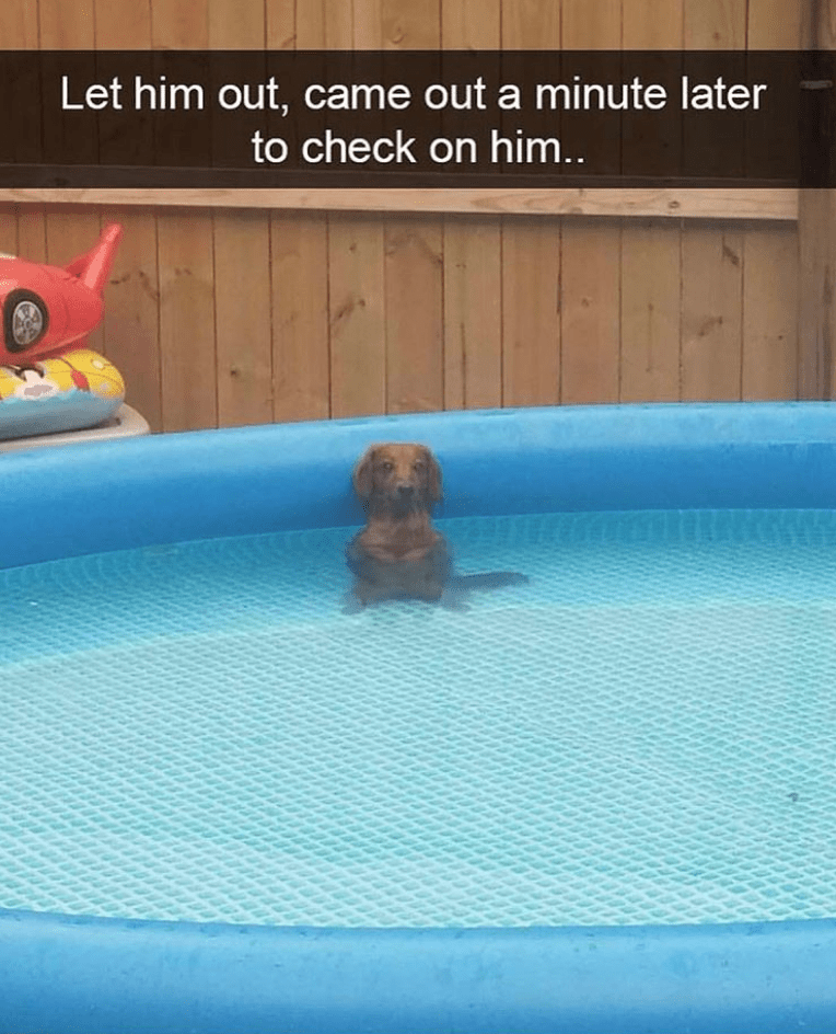 Swimming pool - Let him out, came out a minute later to check on him..