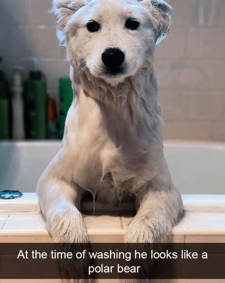 Mammal - At the time of washing he looks like a polar bear