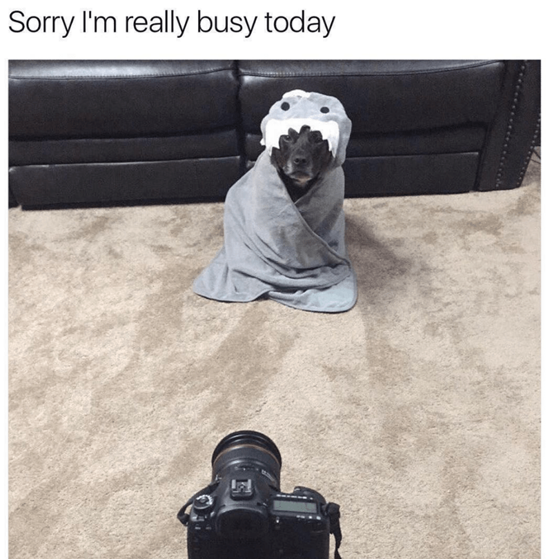 Photograph - Sorry I'm really busy today