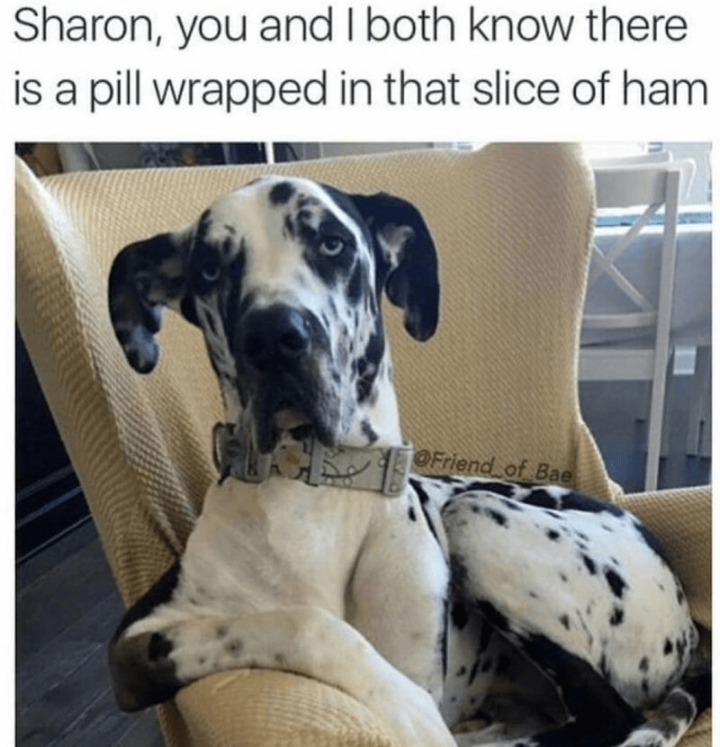 Dog - Sharon, you and I both know there is a pill wrapped in that slice of ham OFriend of Bae