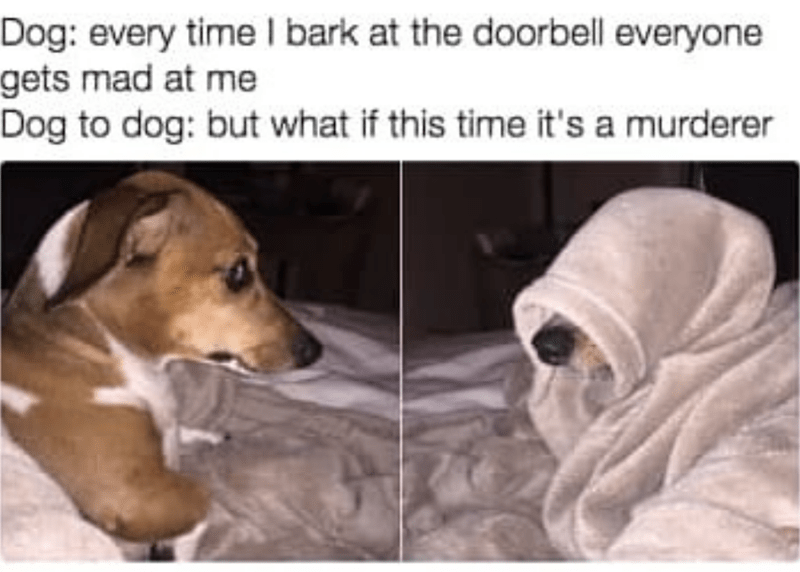 Dog breed - Dog: every time I bark at the doorbell everyone gets mad at me Dog to dog: but what if this time it's a murderer