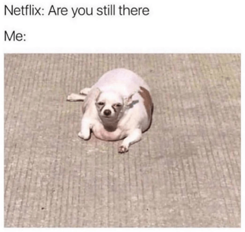 Dog - Netflix: Are you still there Me: