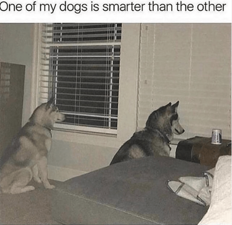 Dog - One of my dogs is smarter than the other