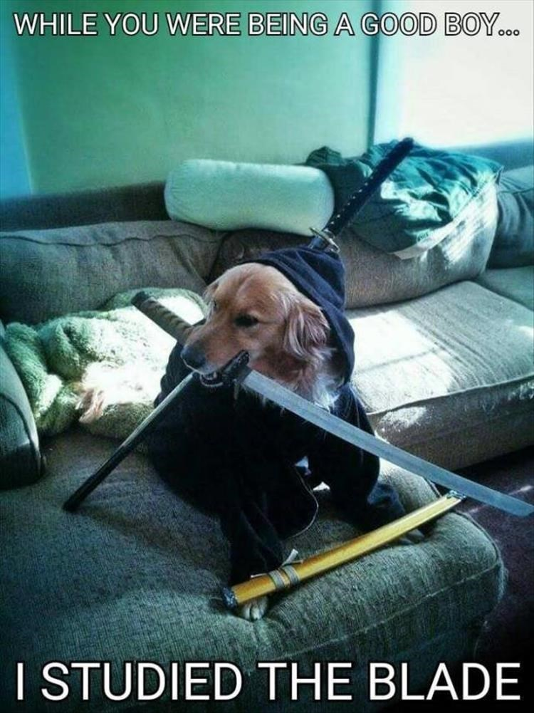 Photo caption - WHILE YOU WERE BEING A GOOD BOY.. o0o I STUDIED THE BLADE
