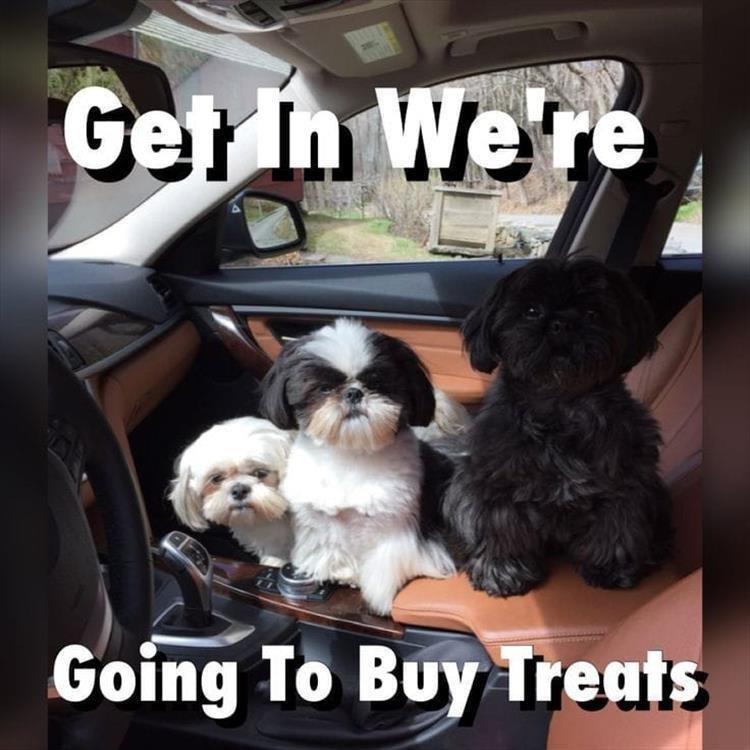 Dog - Get In We're Going To Buy Treats