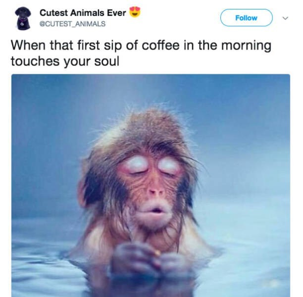 Text - Cutest Animals Ever Follow @CUTEST ANIMALS When that first sip of coffee in the morning touches your soul
