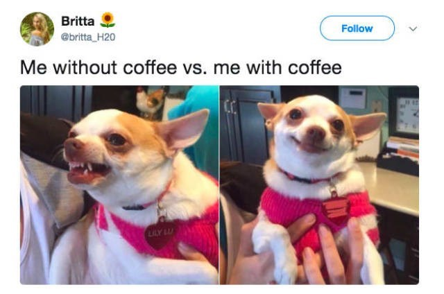 Dog - Britta Follow @britta H20 Me without coffee vs. me with coffee LLY LU
