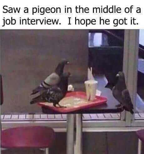 Bird - Saw a pigeon in the middle of a job interview. I hope he got it