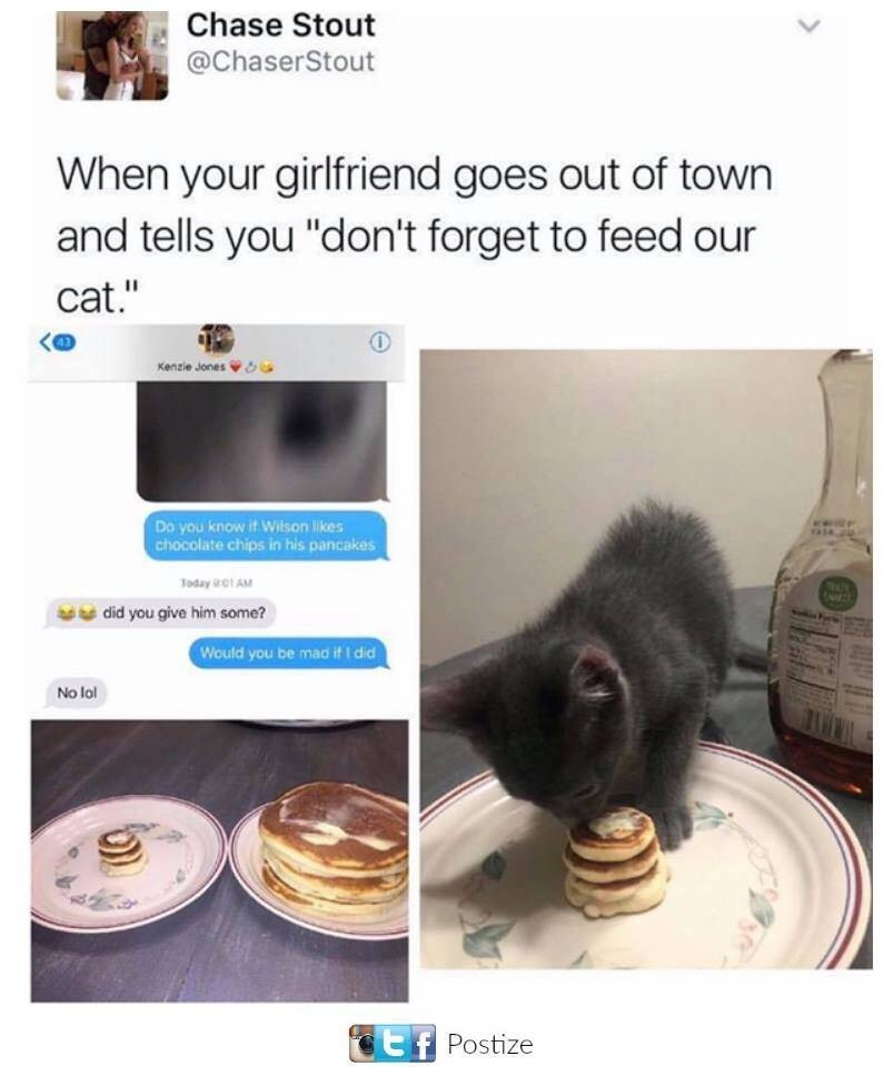"""Cat - Chase Stout @ChaserStout When your girlfriend goes out of town and tells you """"don't forget to feed our cat."""" Kenzie Jones r Do you know it Wilson likes chocolate chips in his pancakes Today 1 AM gdid you give him some? Would you be mad if I did No lol Postize"""