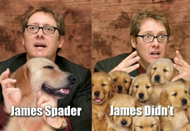 Dog breed - James Didn't James Spader