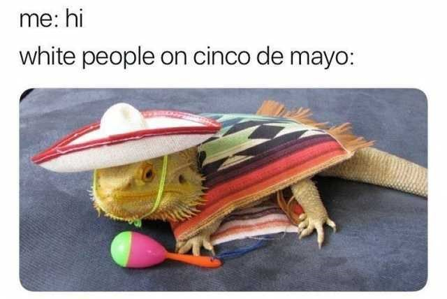 """Caption that reads, """"Me: hi; White people on Cinco de Mayo: ..."""" above a funny photo of a lizard wearing stereotypical Mexican attire"""