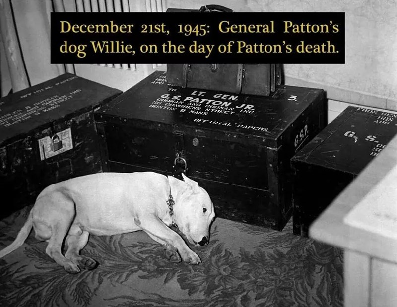Bull and terrier - December 21st, 1945: General Patton's dog Willie, on the day of Patton's death. LT GEN G..SPATTON JR T アO GEN 0 CO1 ESS STE T 3OSTO MASS APO INC w.AR 50 136