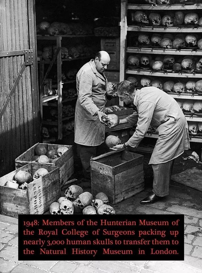 Snapshot - 1948: Members of the Hunterian Museum of the Royal College of Surgeons packing up nearly 3,000 human skulls to transfer them to the Natural History Museum in London. LONDON AURPORS