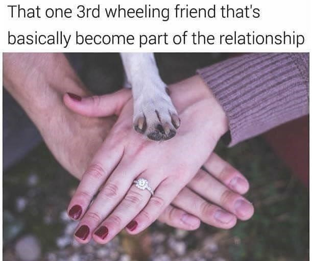"Caption that reads, ""That one 3rd wheeling friend that's basically become part of the relationship"" above a photo of a couple's hands on top of each other and a dog's paw on top of their hands"