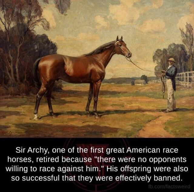 """Horse - Sir Archy, one of the first great American race horses, retired because """"there were no opponents willing to race against him."""" His offspring were also so successful that they were effectively banned. fb.com/factsweird"""