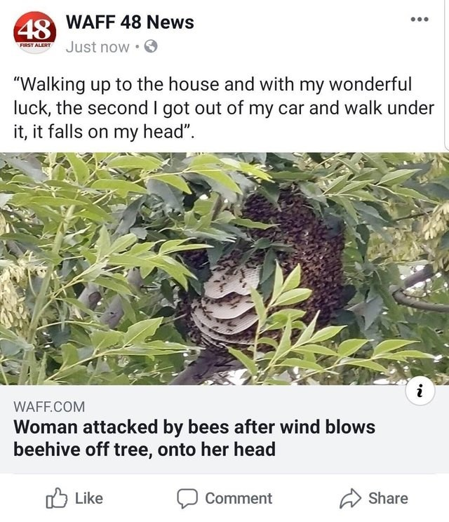 """Plant - 48WAFF 48 News Just now FIRST ALERT """"Walking up to the house and with my wonderful luck, the second I got out of my car and walk under it, it falls on my head"""" i WAFF.COM Woman attacked by bees after wind blows beehive off tree, onto her head Like Share Comment"""