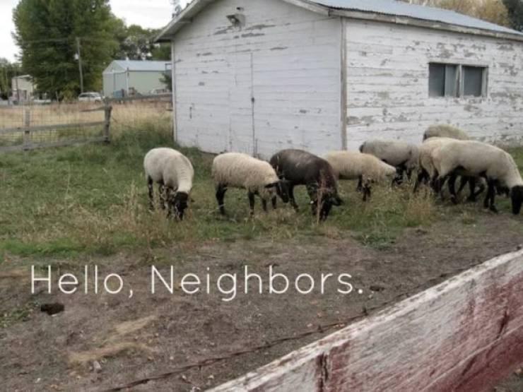 small town meme - Vertebrate - Hello, Neighbors.