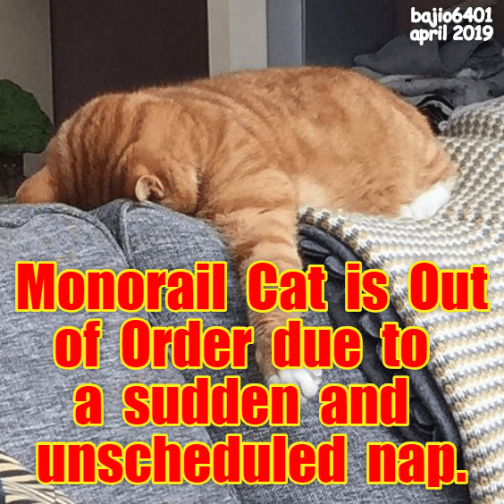 Photo caption - bajio6401 april 2019 Monorail Cat is Out of Order due to a sudden and unscheduled nap