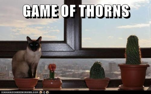 Cat - GAME OF THORNS ICANAASCHEEZEURGERCOM