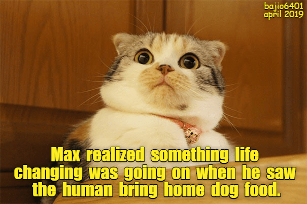 Cat - bajio6401 april 2019 Max realized something life changing was going on whe he saw the human bring home dog food.