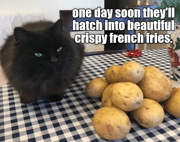 Food - one day soon they'll hatch into beautiful crispy french fries,