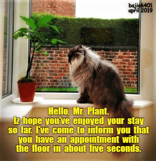 Cat - bajio6401 april 2019 en Hello, Mr. Plant 1z hope you've enjoyed your stay So far. I've come to inform you that you have an appointment with the floor in about five seconds