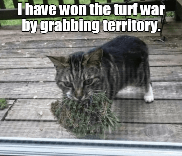 Cat - Thave won the turf war by grabbing territory
