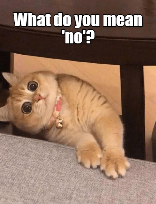 Cat - What do you mean 'no'? NITO