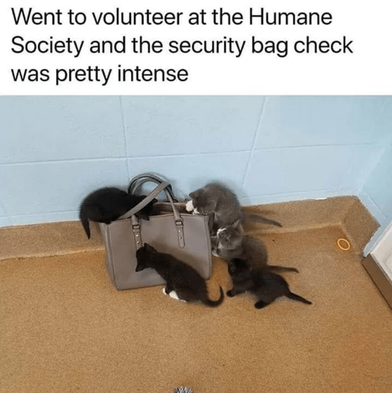 cat memes - Cat - Went to volunteer at the Humane Society and the security bag check was pretty intense