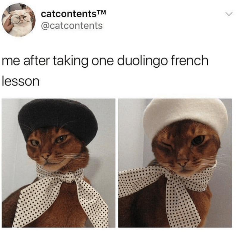 cat memes - Cat - catcontentsTM @catcontents me after taking one duolingo french lesson