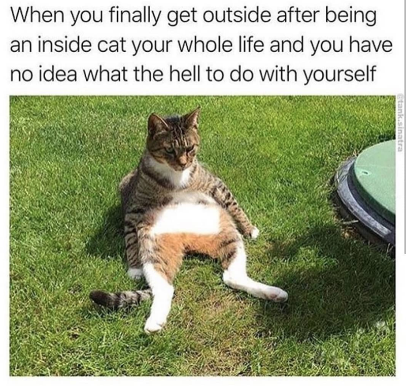 cat memes - Cat - When you finally get outside after being an inside cat your whole life and you have no idea what the hell to do with yourself etank.sinatra
