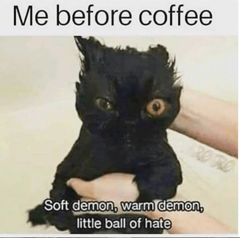 cat memes - Cat - Me before coffee Soft demon, warm demon, little ball of hate