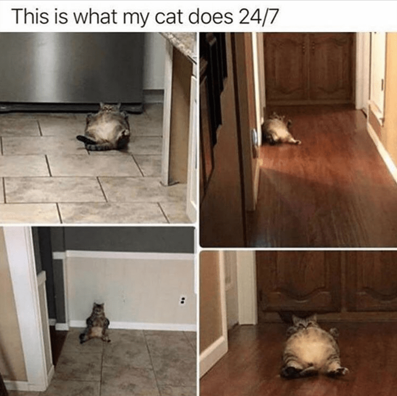 cat memes - Floor - This is what my cat does 24/7