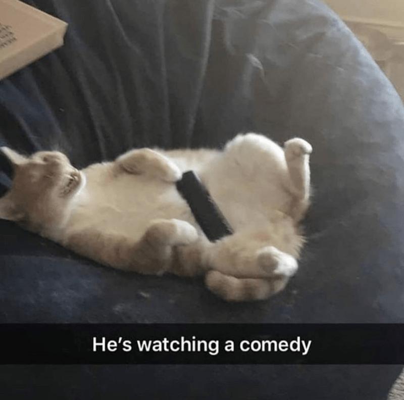 cat memes - Cat - He's watchinga comedy