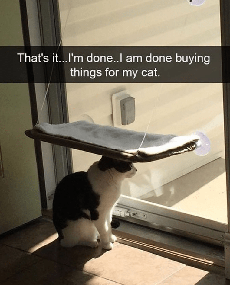 cat memes - Cat - That's it...I'm don..l am done buying things for my cat.