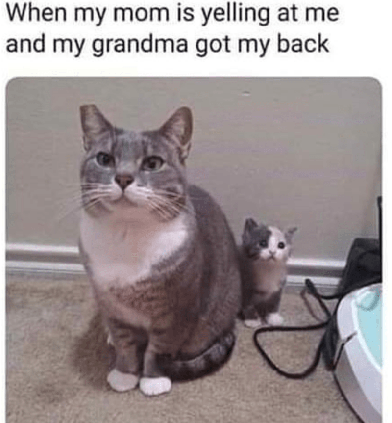 cat memes - Cat - When my mom is yelling at me and my grandma got my back