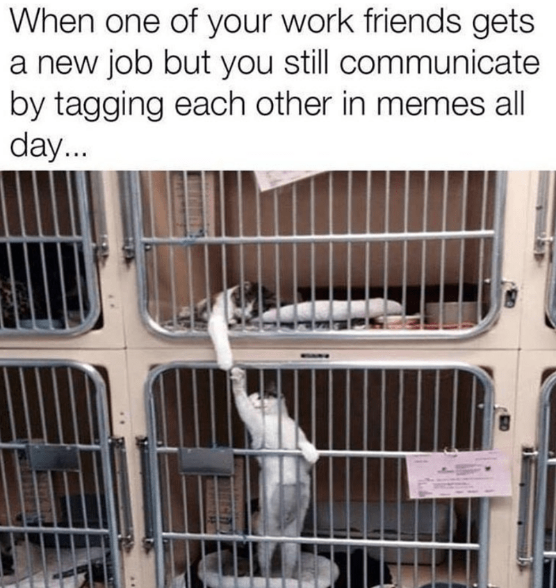 cat memes - Cage - When one of your work friends gets a new job but you still communicate by tagging each other in memes all day...