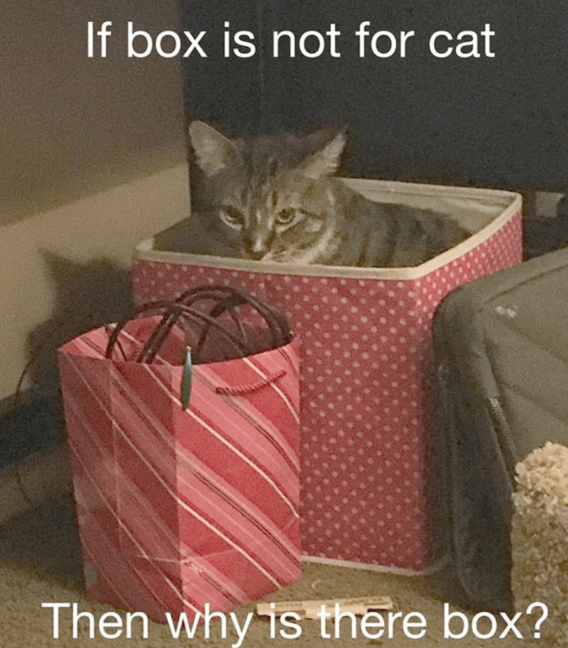 cat memes - Cat - If box is not for cat Then why is there box?