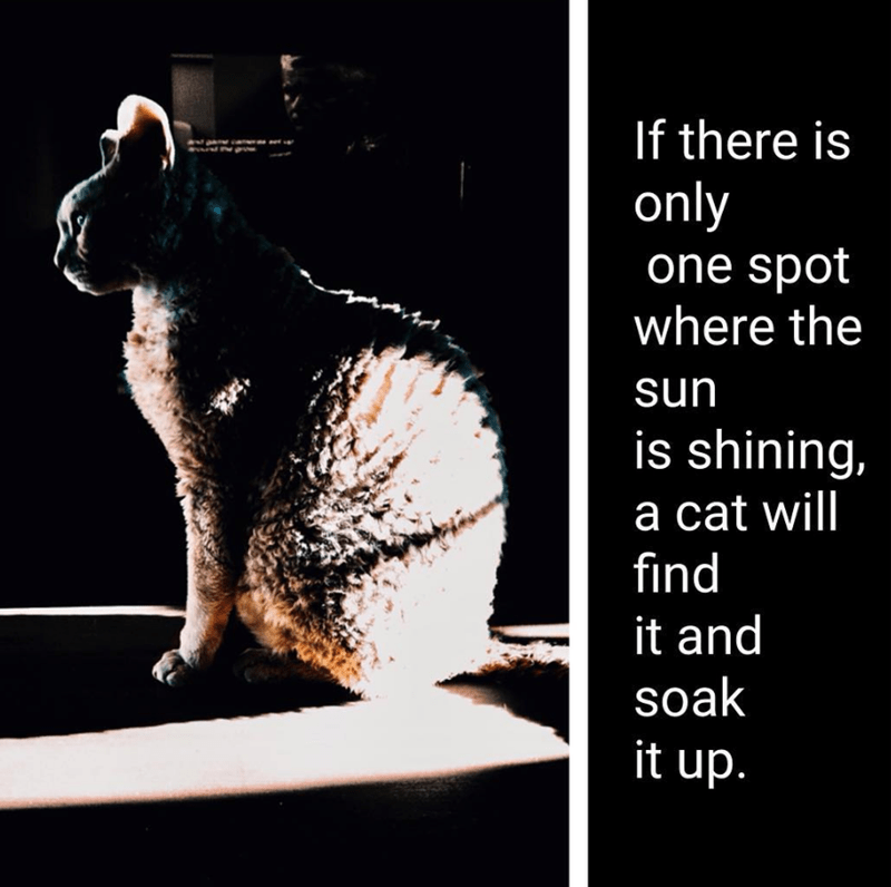 cat memes - Cat - If there is only one spot where the sun is shining, a cat will find it and soak it up.