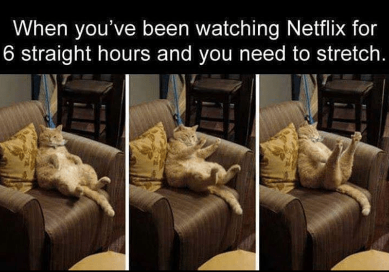 cat memes - Couch - When you've been watching Netflix for 6 straight hours and you need to stretch.