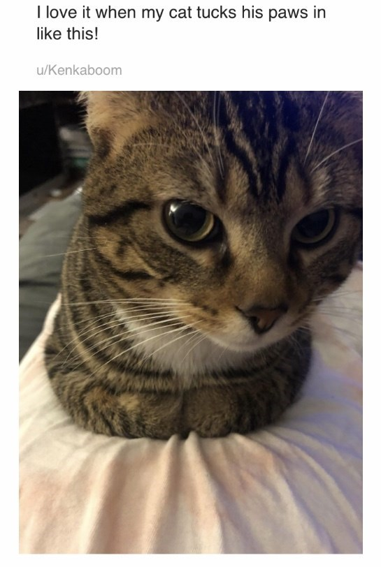 Cat - I love it when my cat tucks his paws in like this! u/Kenkaboom