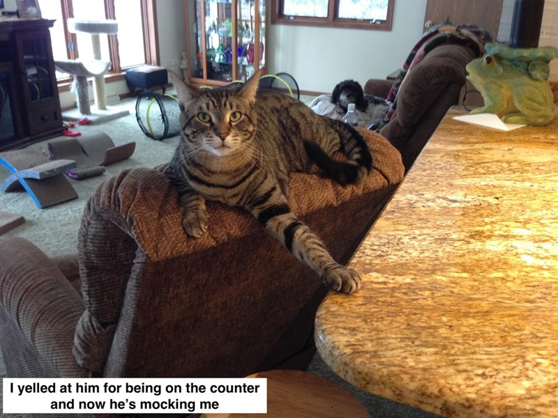 Cat - I yelled at him for being on the counter and now he's mocking me