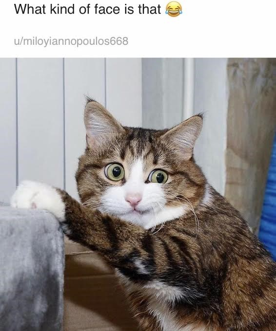 Cat - What kind of face is that u/miloyiannopoulos668