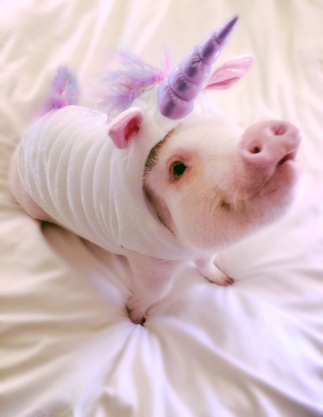 cute pigs - Pink - V