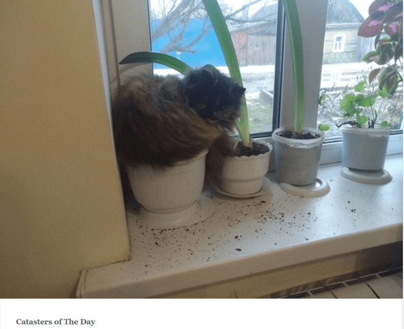 Flowerpot - Catasters of The Day