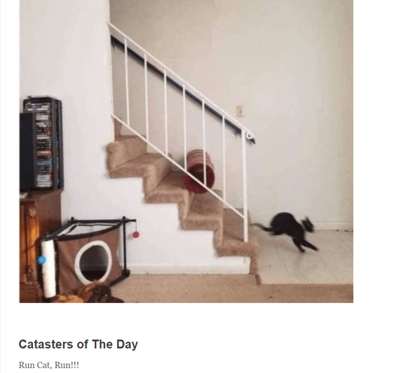 Stairs - Catasters of The Day Run Cat, Run!!!