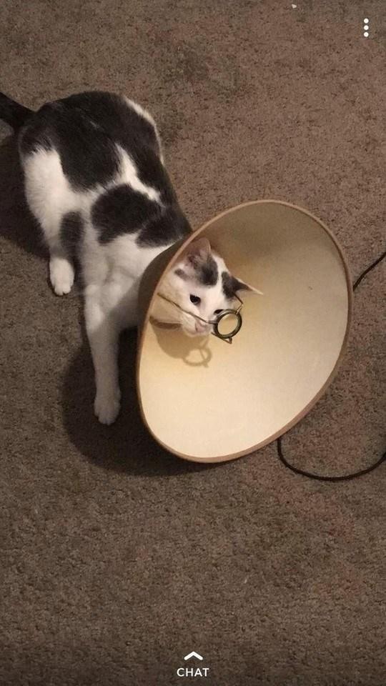 Cat - CHAT .ее